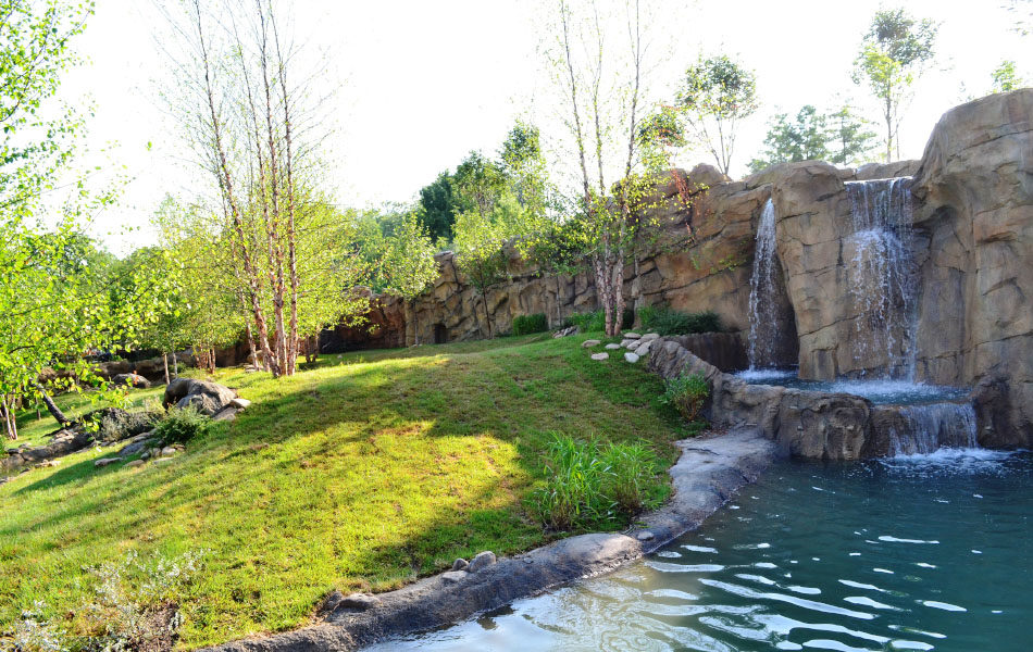 Cincinnati Zoo Painted Dog exhibit environment