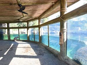 Cincinnati Zoo Hippo Cove