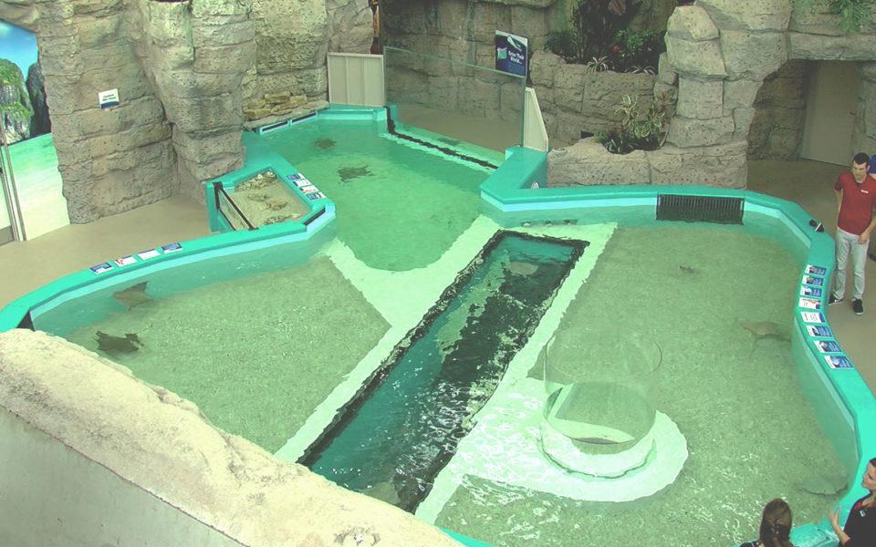 Top view of sting ray tank at Newport Aquarium
