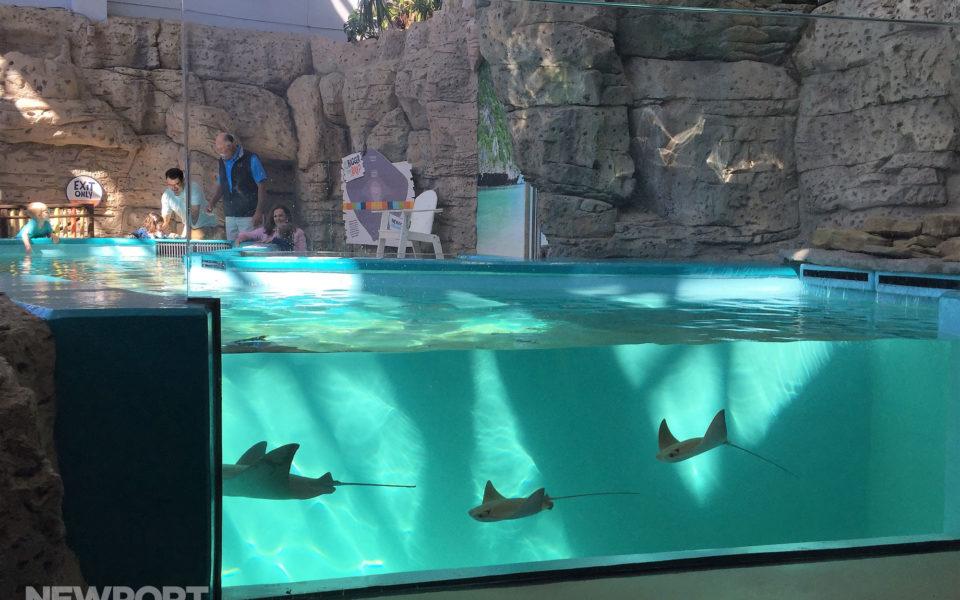 Newport Aquarium sting ray tank