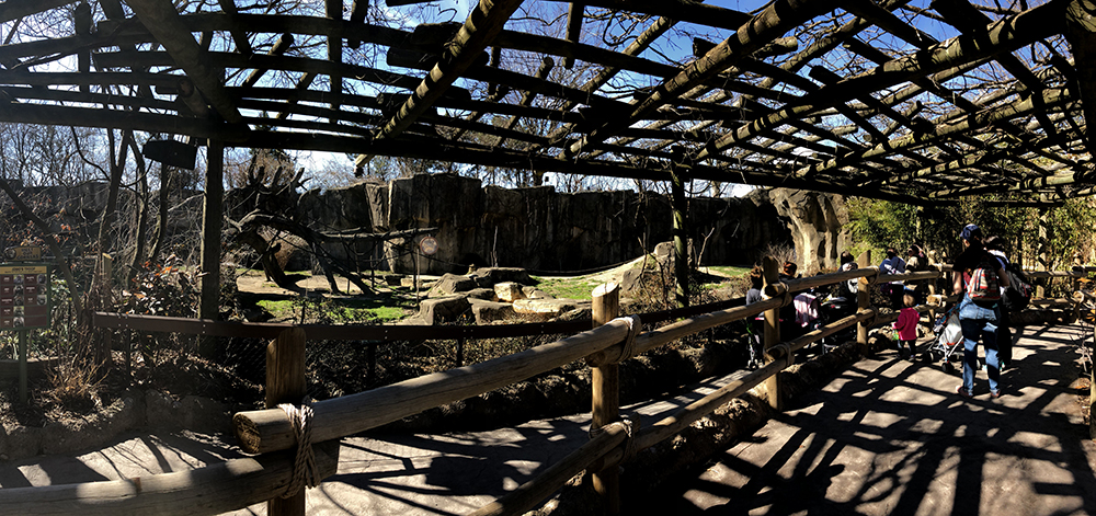 A zoological habitat. The landing for viewers has two levels, divided by wooden fencing, and covered by a wooden canopy covered in vines, currently leafless due to the season. Blue sky can be seen through the openings of the canopy. To the right of the image can be seen the backs of a group of zoo visitors. In the background the habitat is visible. It is for gorillas and features boulders, a large climbing tree with artificial vines, and some grassy areas. High cliffs make the back edge of the habitat.