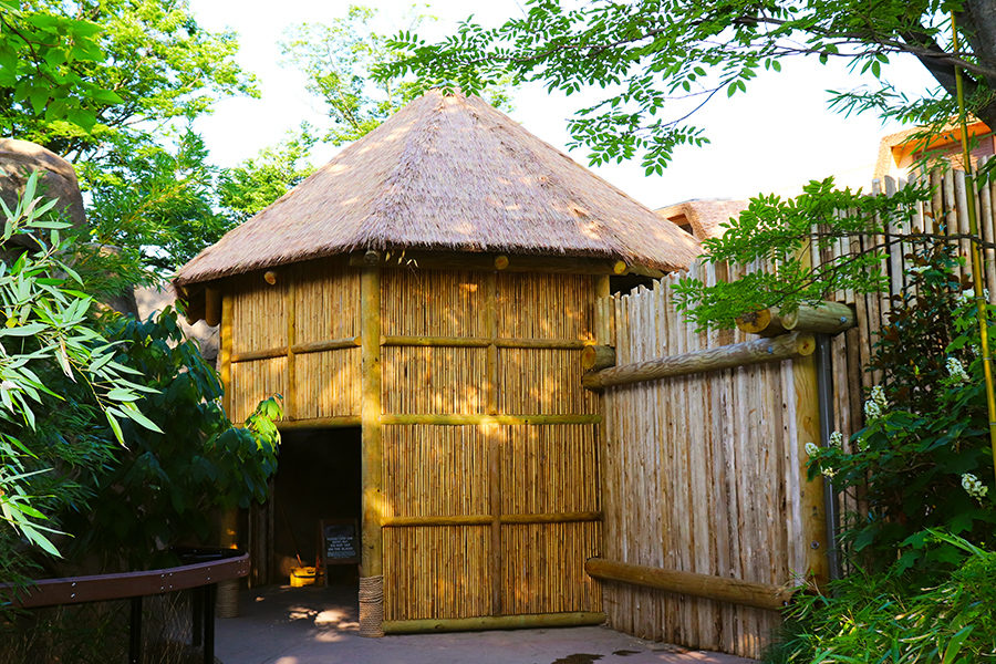 The entrance to the interior viewing area of a zoological habitat. The structure is made to look like a hexagonal hut, with large wooden beams providing framework and smaller sticks lined up to create the wall. The roof looks like hay thatching. A wall to the right is made of large wooden beams. There are lots of trees and shrubs framing the area.