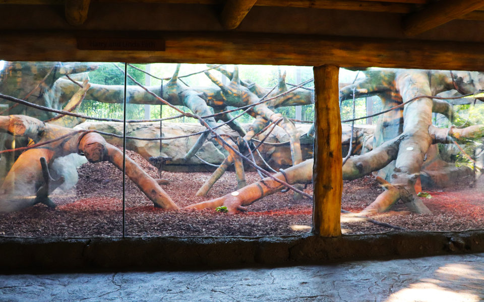 Interior zoological display. A large glass wall reveals a habitat for gorillas. A wide variety of artificial trees and fines are surrounded by a dirt and mulch ground mixture. The viewing area in the foreground has a cement floor made to simulate rock, and a ceiling of log beams.